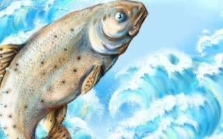 Видеть во сне много рыбы сонник