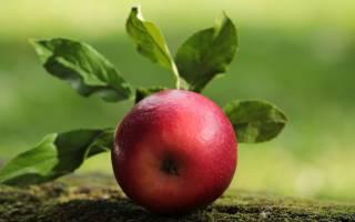 Видеть во сне много яблок сонник