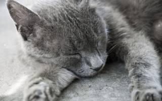 Какие сны снятся кошкам сонник