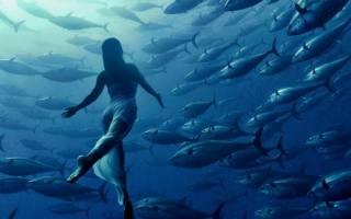 К чему снится много рыбы женщине сонник