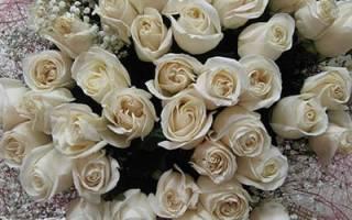 Видеть во сне белые розы сонник