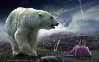 Снится сильный медведь для одинокой девушки сонник
