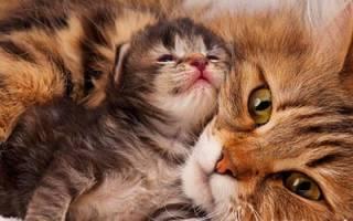 К чему снится рождение котят сонник
