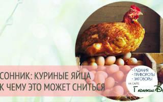 К чему снятся белые куриные яйца сонник