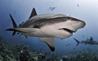 Видеть во сне акулу сонник