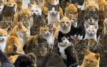 Видеть во сне много кошек и котят сонник