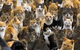 К чему снятся кошки женщине много сонник