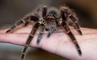 К чему снится укус паука в руку сонник