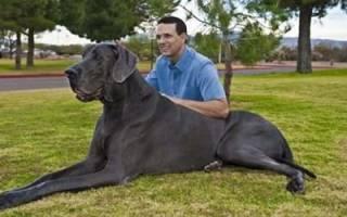 Сонник большая собака ластится