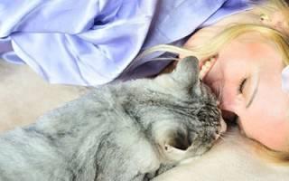 К чему снится ласковая кошка сонник