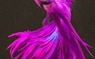 Сниться риба сонник