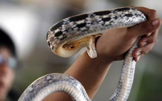 Видеть во сне укус змеи сонник