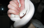 Во сне укусила белая змея сонник