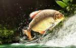 К чему снится ловить рыбу руками девушке сонник