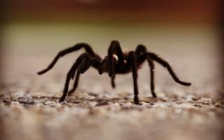 К чему снятся пауки на потолке сонник