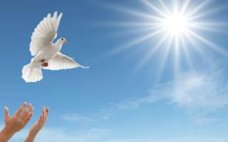 Белая птица во сне сонник