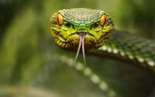 К чему снятся змеи женщине сонник
