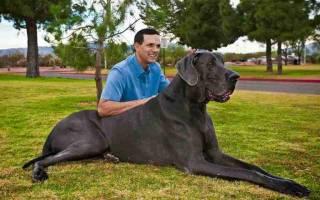 Видеть во сне большую собаку женщине сонник