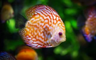 К чему снится мелкая рыба женщине сонник