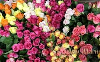 Есть цветы во сне сонник