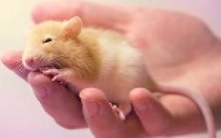 К чему снится много мышей в доме сонник