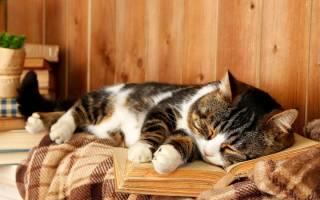 К чему снится кошка во сне мужчине сонник