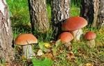 Видеть во сне белые грибы сонник