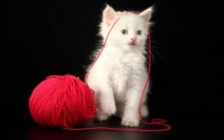 Сонник белый котенок на руках