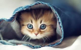К чему снится розовая кошка сонник