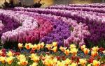 Много цветов во сне сонник