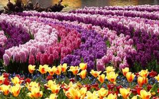 Видеть во сне много цветов сонник