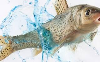 К чему снится тухлая рыба мужчине сонник