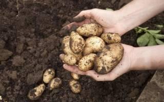 К чему снится копать картошку сонник