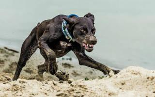 К чему снится убегать от собаки сонник