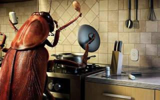 Сонник тараканы в доме