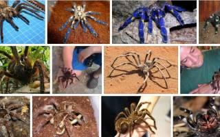 Сонник к чему снятся пауки большие