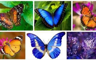 К чему снится бабочка на руке сонник