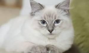 К чему снится кошка женщине замужней сонник