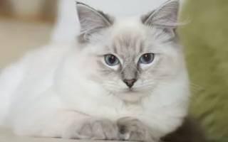 К чему снится кошка без хвоста сонник