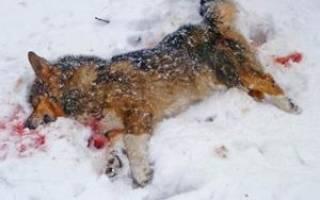 Видеть во сне мертвую собаку сонник