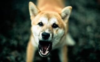 К чему снятся злые собаки во сне сонник