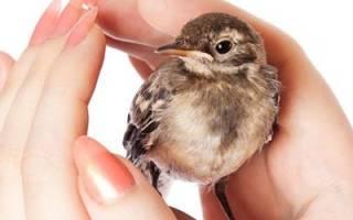 К чему снится маленькая птичка сонник