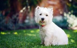 К чему снится большая белая собака сонник