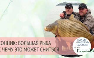 К чему снится большая рыба мужчине сонник