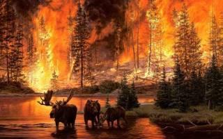 Сонник видеть пожар