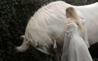 К чему снится белый конь сонник