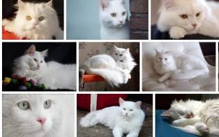 Сонник белый кот на руках