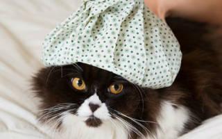 К чему снится больная кошка сонник