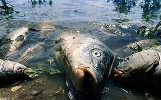Мертвая рыба во сне сонник