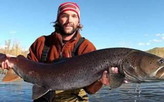 К чему снится поймать большую рыбу сонник